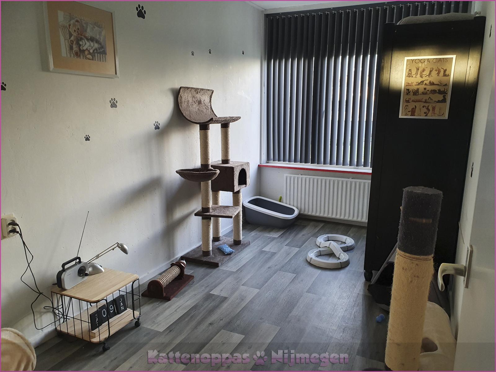 Kamer2: luxe kattenkamer met brede vensterbank!